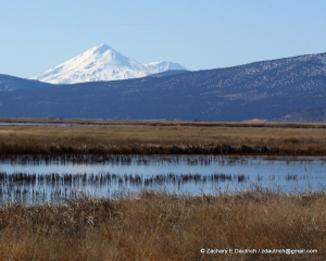 Lower Klamath Basin National Wildlife Refuge & Mt Shasta