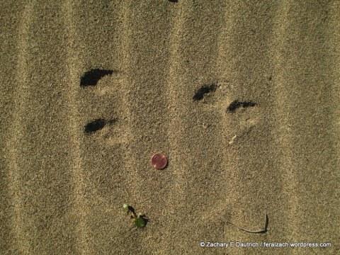 brush rabbit tracks