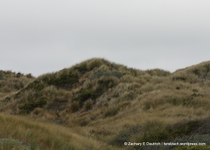 beautiful dune grasses