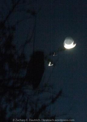 owl, venus, mars and moon
